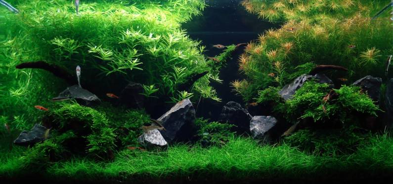 Sample Layout Aquascape Design12_24148_image002.jpg