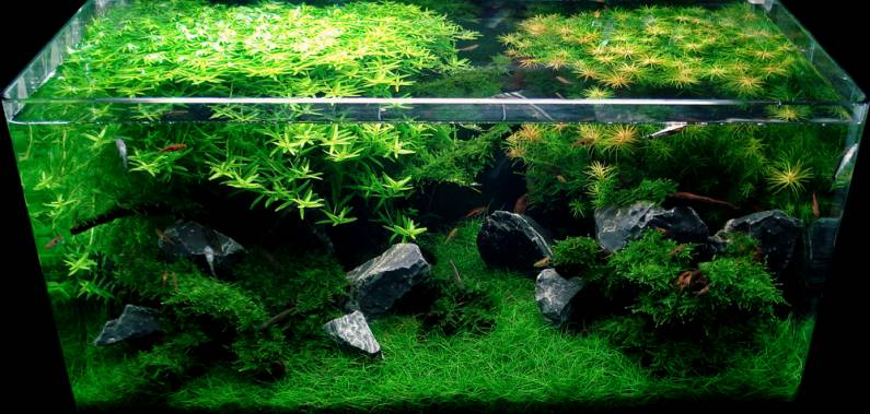 Sample Layout Aquascape Design12_24148_image004.jpg