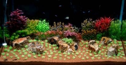 bubbles aquarium aquascapes 2007 aquascaping gallery