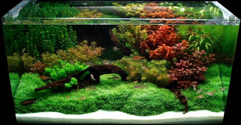 Bubbles aquarium aquascapes 2007 aquascaping gallery - Gallery aquascape ...