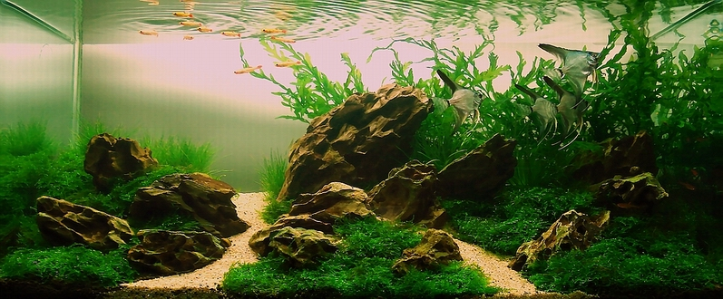 Index of /images/Aquascape/Gallery_2008/Mystic_River