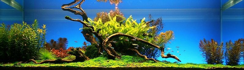 Bubbles Aquarium Aquascapes 2008 Aquascaping Gallery