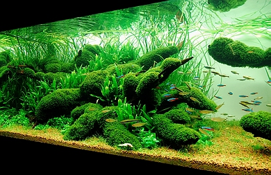 how to cycle a fish tank with tetra safestart