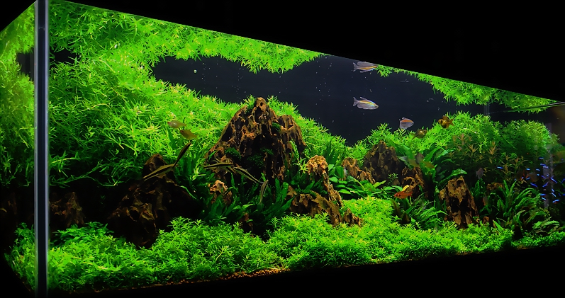 Bubbles aquarium aquascapes 2009 aquascaping gallery - Gallery aquascape ...