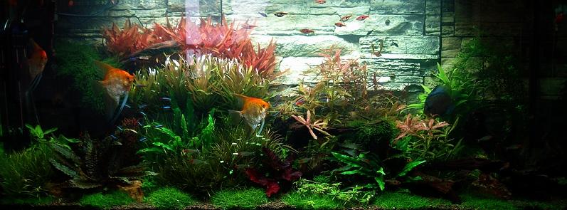 Bubbles Aquarium Aquascapes Tank Setups Projects