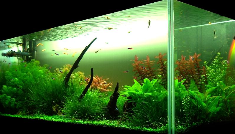 Bubbles aquarium aquascapes tank setups projects for Aquarium angle