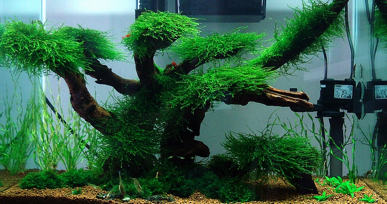 ... , Mid Levels, Hong Kong (Designed and Maintained by Bubbles Aquarium