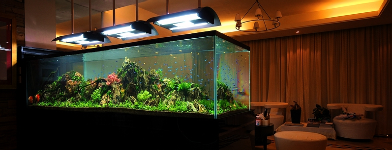 Aquascape Bubble Light - Aquascape Ideas