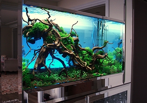 Bubbles Aquarium - Aquascapes (Tank Setups / Projects)