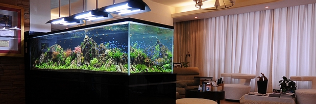Image Result For Home Aquarium P Os