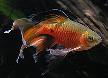 Bubbles Aquarium Fish